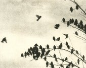 Doves, etching, warm sepia tone