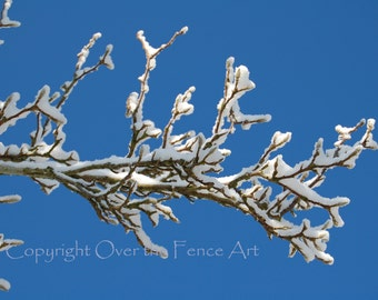 Christmas Card Snowy Branch Blank Greeting Card Photography bright blue skies winter wonderland