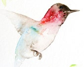 Hummingbird Art Fine Art Print from Original Watercolor
