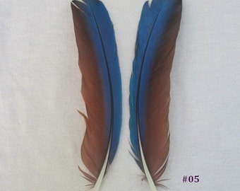 Green Wing Macaw Feathers - 7 to 8 Inch - Matched Sets of Bird Feathers