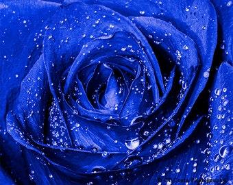 Blue Rose Photo, Flower Still life art, Floral wall art, Blue Room Decor, water drops, violet