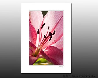 Pink Lily Matted Art Print, Gift under 10 dollars, Passion Pink, Signed matted Flower wall art fits 5x7 inch frame