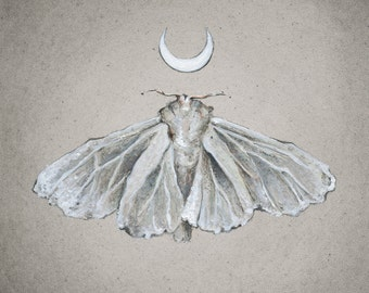 Lunar White Moth - Print of Oil Painting