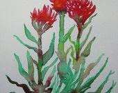 Original watercolor painting, Indian paintbrush flower painting