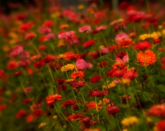 Wildflower Field, Flower Photograph, Late Summer, Wildflowers, Red, Green, Pink, Yellow, Colorful, Dreamy, Home Decor, Wall Art