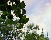Ginkgo photograph, Prague, st vithus cathedral, hidden, whimsical photograph, 10x8, giclee, titled: Royal ginkgo