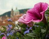 St Nicholas church, Prague in summer, pink flower, dreamy cityscape, whimsical landscape, Prague in pink, 12x8, fine art photography