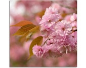 Pastel Spring Blossoms, dreamy flower photo fine art print bokeh soft focus pink spring mothers day 8 x 8 europeanstreetteam