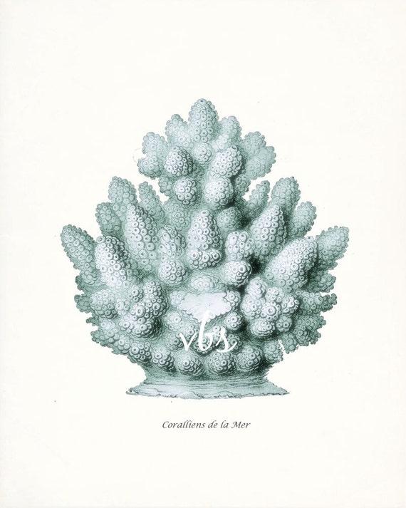 Coastal Decor  E. Haeckel Fantasy Sea Coral Giclee Art Print  No. 4 8x10 sea glass