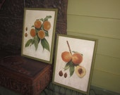 Set of Two Framed Antique Botanical Waddell and Surpasse Peach Prints