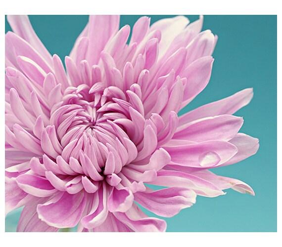 Flower photography - floral wall art - flower room decor - purple teal aqua pink - floral fine art print - macro photography - pretty dream