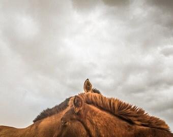 Horse photography print. Cute ears horses. Mongolian ponies kids wall art. Rustic home decor horse lovers art equestrian girls artistic gift