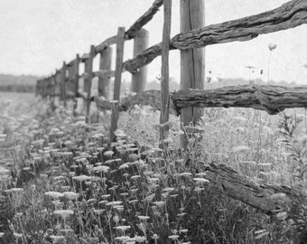Farmhouse Decor, Black and White Photograph, Fence Photography, Nature Artwork, Landscape Wall Art, Country Picture