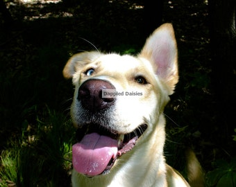 Photograph of a happy dog