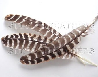 Long turkey wing feather quill, natural brown barred feather, real feather for millinery, DIY crafts, decor / 10-14 in (25-35cm) long / F124