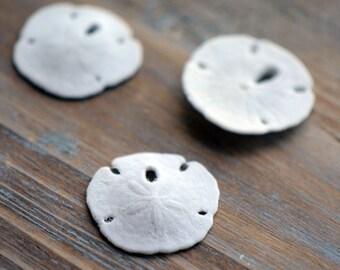 3 - Real Sand Dollar Small Sanddollar Terrarium Supplies Pendant Charm Jewelry Supplies (AL018)