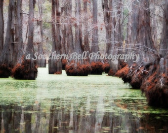 Lake House Photography Bayou Water Photos Red Moss 8x10 Trees Swamp Lake Photo Water Red Tree Louisiana Bayous and Swamps Cabin Art 18