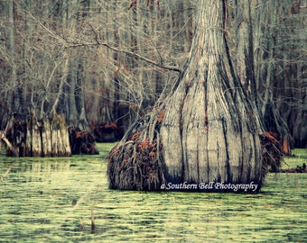 Lake House Decorations Wall Art Office Pictures Swamp Bayou pics Green Trees and Moss on Water. 8x10 Louisiana Bayous. Cabin Photos 13