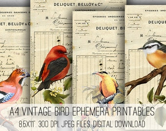 Digital Collage Sheet Download - A4 Vintage Bird Ephemera -  1048  - Digital Paper - Instant Download Printables