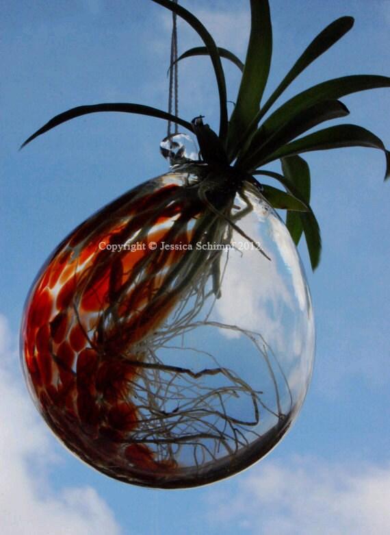 ... Glass Hanging Planter, Terrarium Air Plant Vase, Spider Plant Hanging