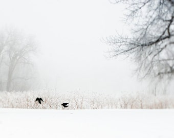 Crow Fine Art Winter Photography - Prairie Art, Bird Contemporary Fine Art Photography Print - Large Landscape