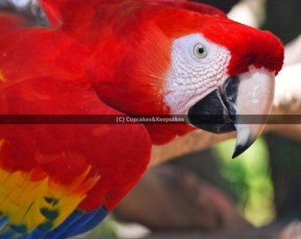 "Bird ""Macaw"" Fine Art Photograph"