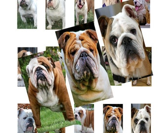 Bulldogs 1x2inch Domino Images Digital Collage 038