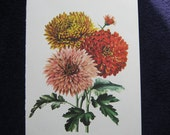 Vintage Flower Chrysanthemum print red pink yellow 1970s