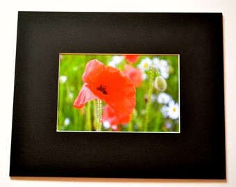 "Mounted Original Photograph - 8 x 6"" - Poppy Passion"