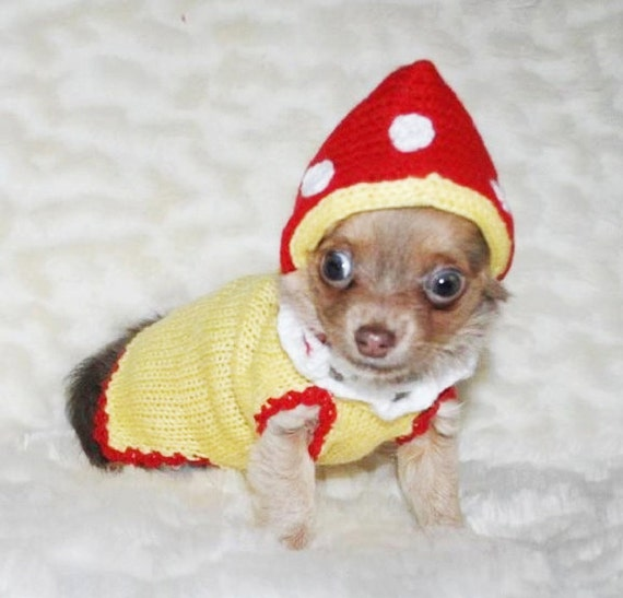 Chihuahua jacken xxs