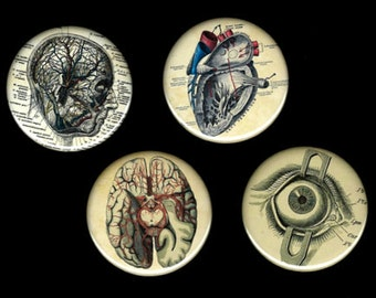 Brain heart Eyeball blood vessels Set of 4 Medical anatomy diagram 2.25 round magnets, pins, mirrors, or bottle openers party favors