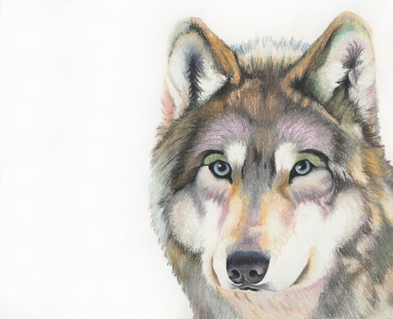 Articles similaires loup dessin original pastel 8 x for Lupo disegno a matita