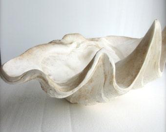 Large Natural Clamshell Clam Shell Seashell Beach Decor Nautical Decor Wedding  Vintage Home decor