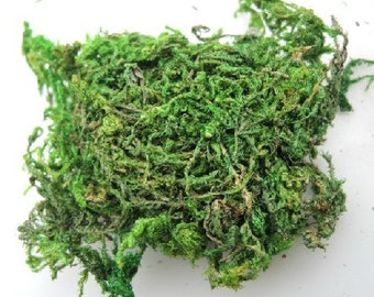 6 bags of dried moss for glass bottle pendant(6 bags  about 8g  )