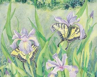 Wild Iris, large giclee print