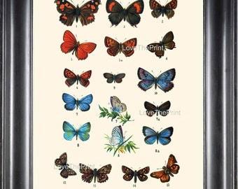 EUROPEAN BUTTERFLY PRINT  Botanical Art Print 6 Beautiful Blue Red Butterflies