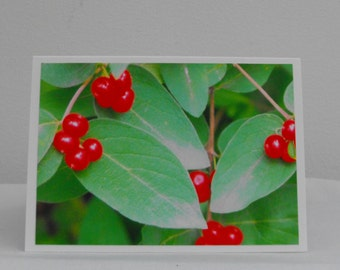 Berries and Leaves Photo Card