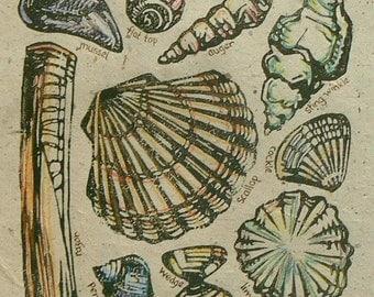 Shells lino cut print
