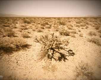 Fine Art Photograph - Nature Photography - Desert Photography - wall art - Art Print - home decor - Mojave Desert - Nevada - USA - zen