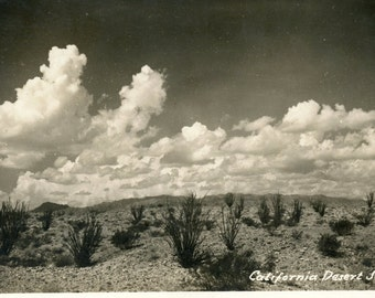 1946 Postcard Featuring The California Desert - Used