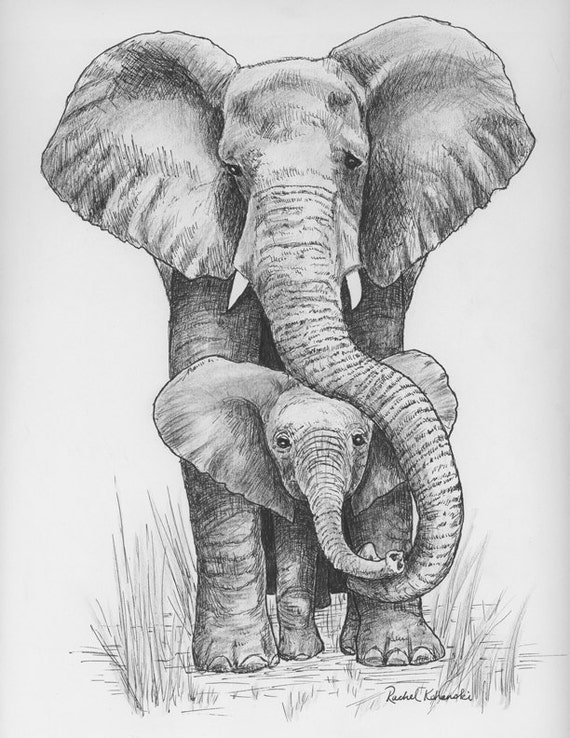 Baby Elephant Drawing Pen And Ink Of Mama By