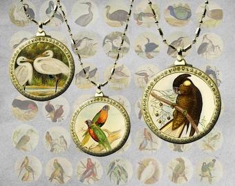 """Vintage Birds Collage Sheet - Instant Download """"VINTAGE BIRDS"""" printable clip art set"""