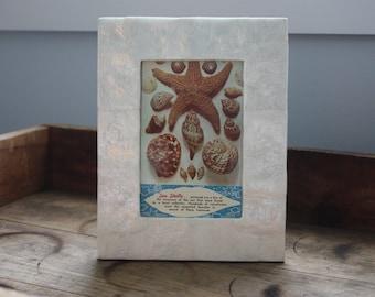 Vintage Seashell and Starfish Postcard - Unused