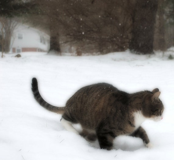 A Dog And Cat Pose In A Winter Scene Stock Photo 141397534 ...  |Winter Scenes With Cats