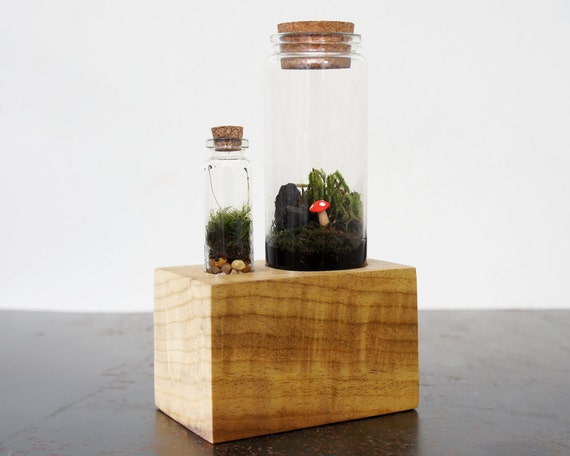 Terrarium Kit with Wood Base by MossTwig on Etsy -> Terrarium Table Basse