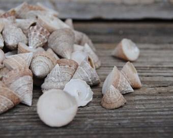 25pc Natural Troca - Tiny Shells - Craft Shells - Jewelry Shells - Craft Supply - Wedding Shells