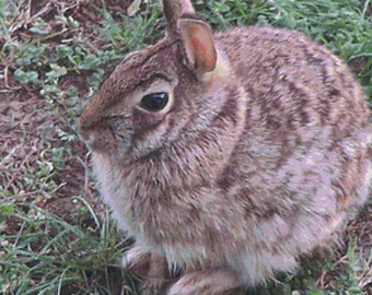 Cute Bunny PDF Cross Stitch Pattern