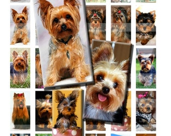 Yorkshire Terrier Yorkie Dog Canine Animal Yorkie Digital Images Collage Sheet 1x2 inch Rectangles Domino Commercial INSTANT Download RD52