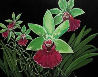 Orchid # 9, Cattleya