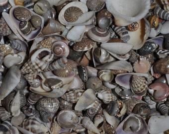 Ocean Tiny Mix Shells (appx. 800 pcs.)